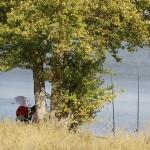 Laguna del Campillo, en Rivas Vaciamadrid