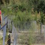 La Laguna del Campillo cuenta con un centro de interpretación de recursos naturales