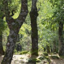 Vegetación del Bosque de la Herrería