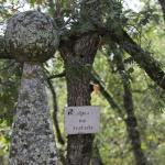 Fuente en el Bosque de la Herrería