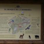 Cartel informativo de la flora y fauna del Bosque de la Herrería
