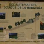Información sobre los ecosistemas del Bosque de la Herrería