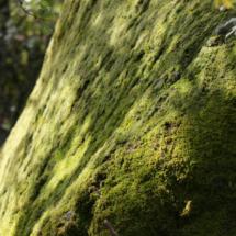 ruta con niños por el bosque de la herrería