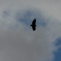 Desde el Bosque de la Herrería se pueden avistar aves rapaces