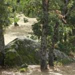 Ruta por el Bosque de la Herrería