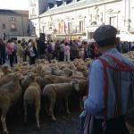 Fiesta de la Trashumancia en Madrid, 2015: itinerario