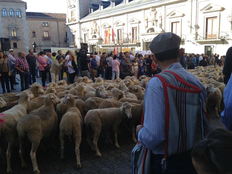 Una vez al año, cientos de ovejas ocupan el centro de Madrid en la Fiesta de la Trashumancia