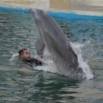 Exhibición de delfines en el Zoo de Madrid