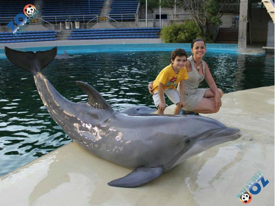 Foto con un delfín en el Zoo de Madrid