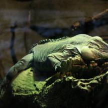 Fotografiando a un camaleón en el Zoo de Madrid