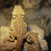 Reptil del Zoo de Madrid