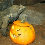 Halloween 2014 en el Zoo Aquarium de Madrid. ©Zoo Aquarium de Madrid.