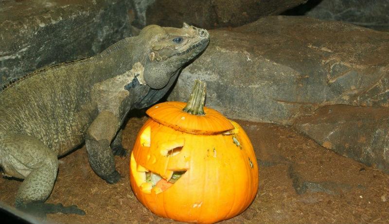 Halloween 2014 en el Zoo Aquarium de Madrid. ©Zoo Aquarium de Madrid.