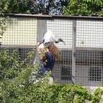 Exhibición de aves rapaces en el Zoo de Madrid