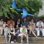 Exhibición de aves exóticas en el Zoo de Madrid
