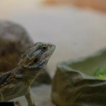 Reptiles del Zoo de Madrid