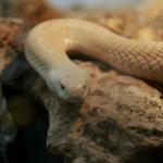 Serpiente del Zoo de Madrid