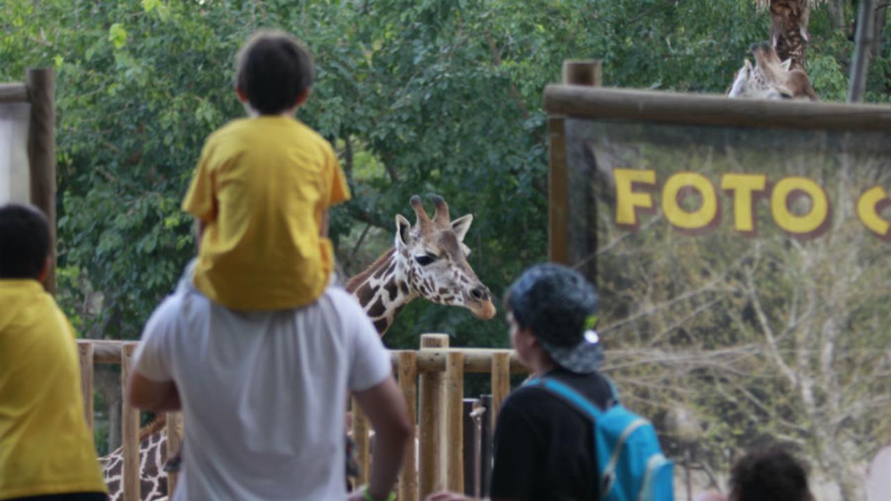 Cómo Y Por Qué Visitar El Zoo De Madrid Con Tus Peques