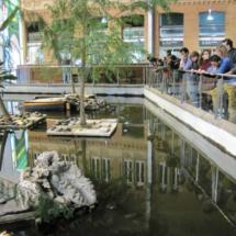 El estanque de la Estación de Atocha está plagado de tortugas