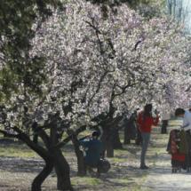 La floración es una época ideal para pasear en familia.