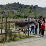 El burro es el animal más acariciado en Naturanavas
