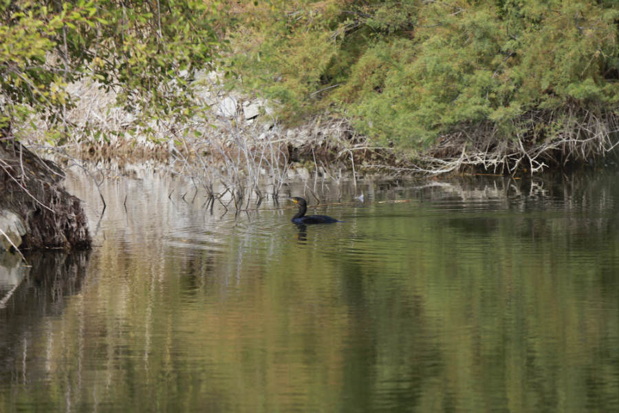 Laguna de Naturanavas
