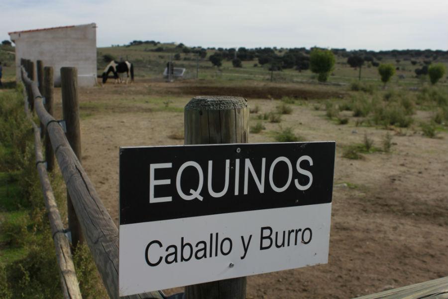 Zona de equinos de Naturanavas