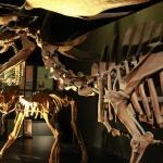 Dinópolis: dinosaurios en Teruel