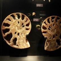 En Dinópolis hay fósiles reales de la época de los dinosaurios