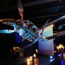 En Dinópolis hay reproducciones de esqueletos de dinosaurios