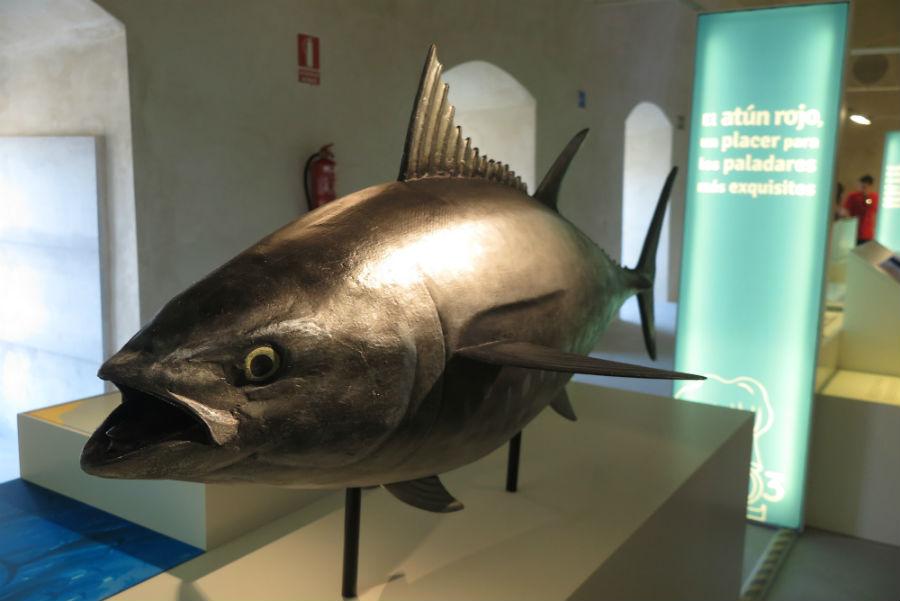 Museo del Atún de Almadraba, en Conil
