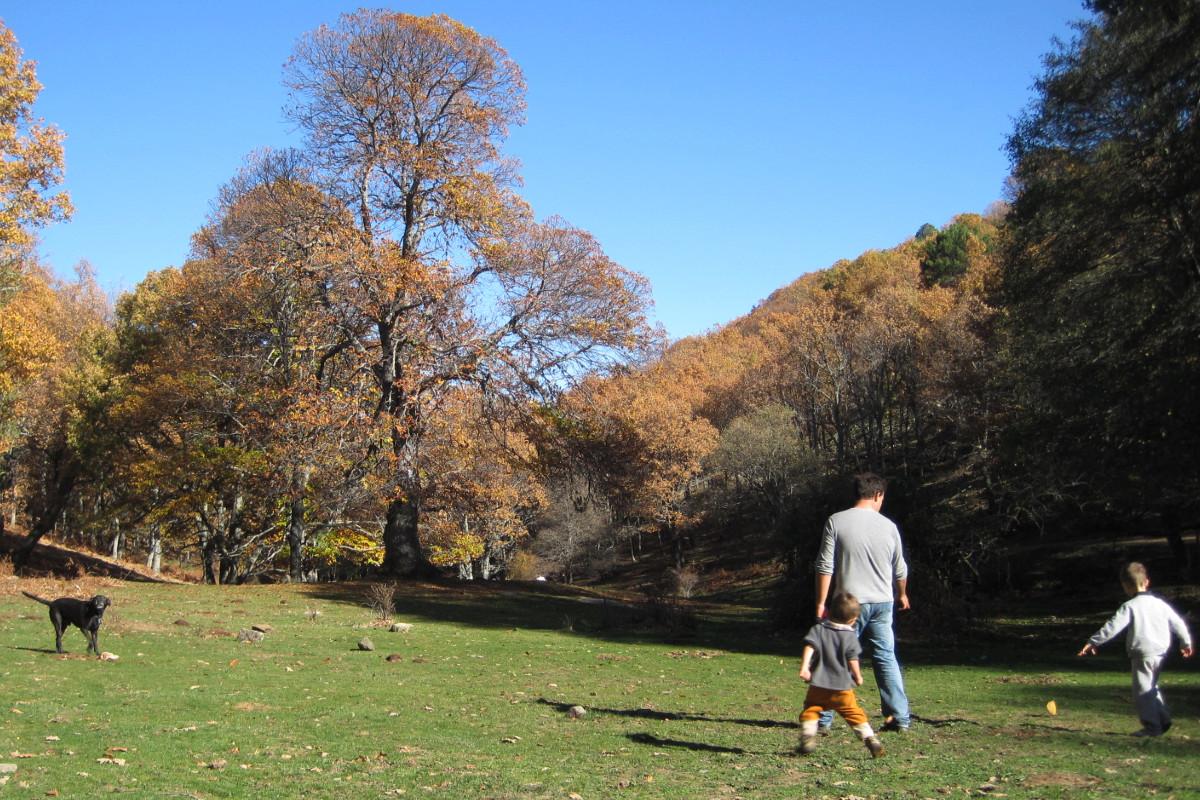 Boscques cerca de Madrid con especial encanto en otoño