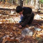 5 planes gratis y al aire libre para el otoño