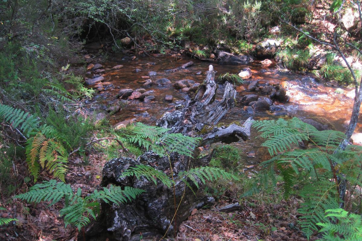 Entorno del Hayedo de Montejo en otoño