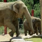 Despídete de Buba en el Zoo Aquarium de Madrid
