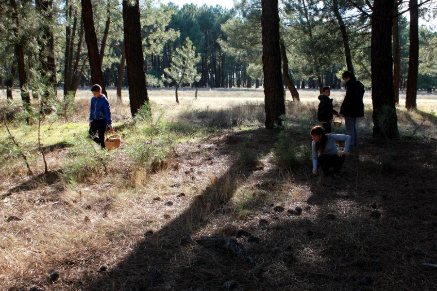 Salir al campo a recoger setas en familia es una actividad muy recomendable para el otoño