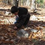 Buscar setas y bichitos es un buen objetivo para una excursión otoñal