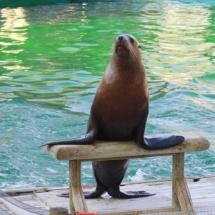 Instalación de focas y leones marinos en Faunia