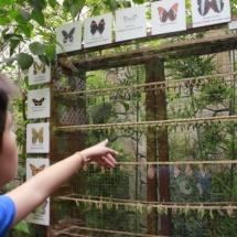 Instalación de mariposas en Faunia.