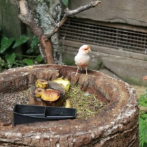 Instalación de pequeñas aves en Faunia.