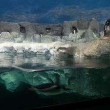Instalación de pingüinos en Faunia.