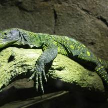 Instalación de reptiles en Faunia.