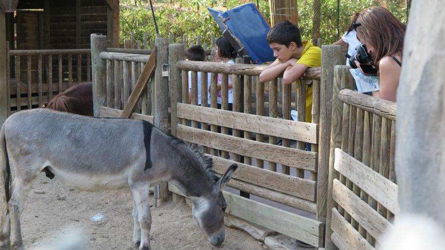 La zona de la granja de Faunia está muy indicada para los niños más pequeños.