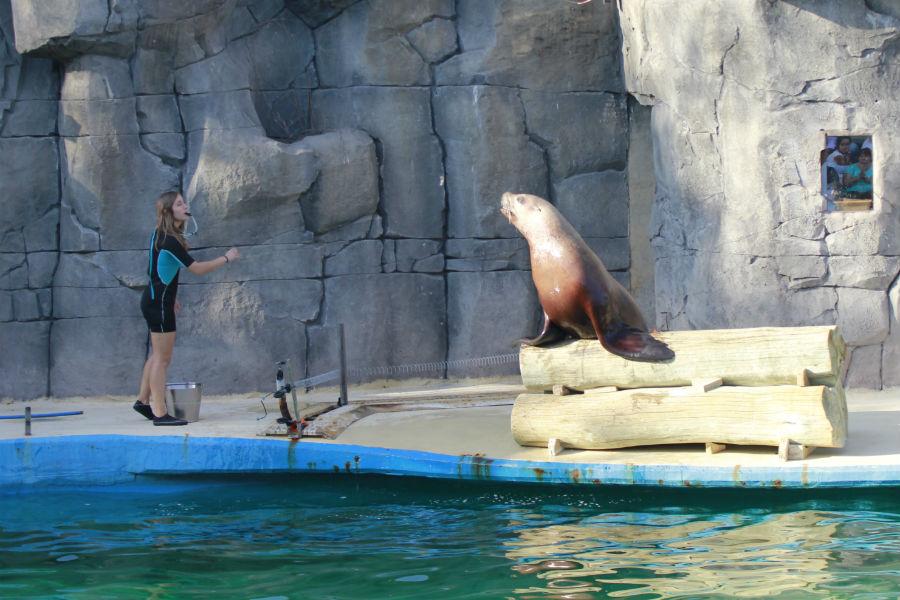 Actividad en Faunia para interactuar con los osos y leones marinos