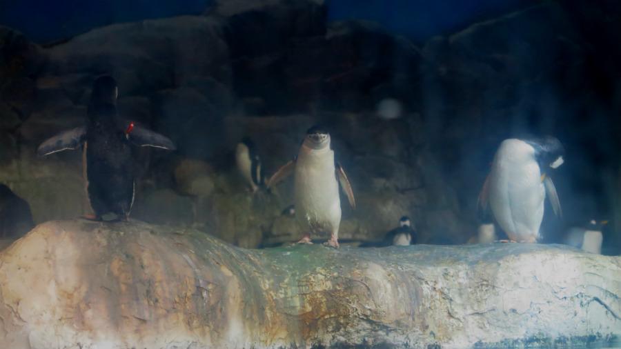 Instalación de pingüinos de Faunia