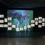 Exposición sobre Julio Verne: horarios