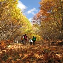 Ruta con niños por Somosierra: la Dehesa Bonita