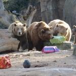 Campamentos de Navidad en el Zoo de Madrid