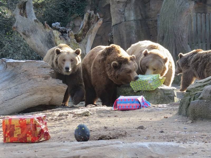 Campamentos de Navidad 2015 en el Zoo de Madrid