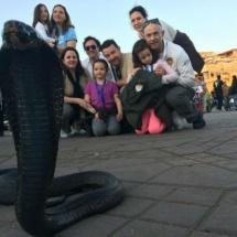 Cobra en Marrakech
